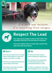 Respect The Lead Poster - I am Recovering From Surgery