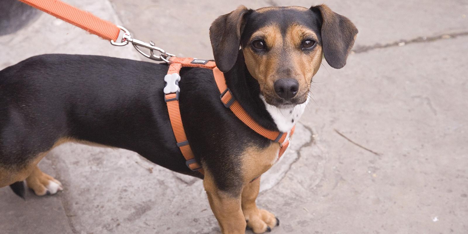 Respect The Lead - The Friendly Pet Nurse - Zoe Blake